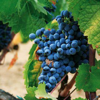 Klassiker im Inselinneren: der Cannonau